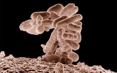 Comment régénérer nos différents microbiotes ?