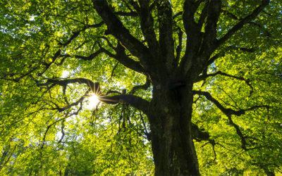 Les arbres, nos amis…